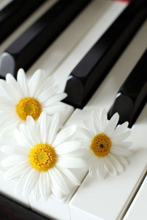 margarite: daisy on Piano Keyboard