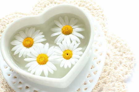 margarite: Daisy on heart shaped bowl with water for background image Stock Photo