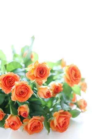 rosas naranjas: Ramo de rosas de color naranja