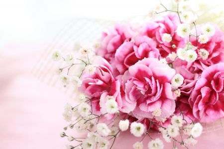 carnations: Mother s day carnation