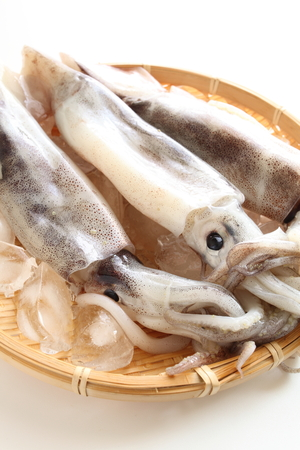 freshness squid on ice cube for food ingredient image Stock Photo - 27030918