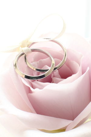close up of single flower purple roses and wedding rings Stock Photo