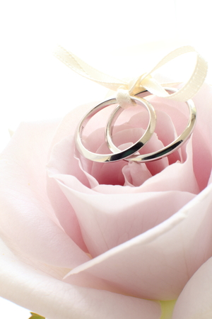 close up of single flower purple roses and wedding rings Stok Fotoğraf