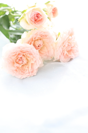 結婚式のバック グラウンド イメージのピンクのバラの花束