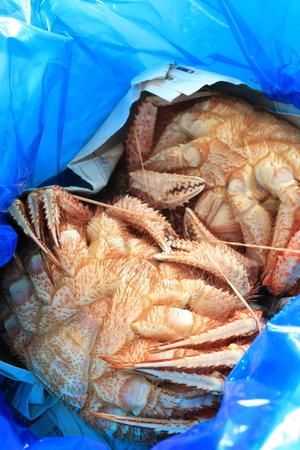 frescura: frescura kegani cangrejo japon�s Foto de archivo