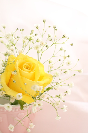 yellow flower: yellow rose and baby breath