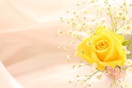 yellow rose and baby breath