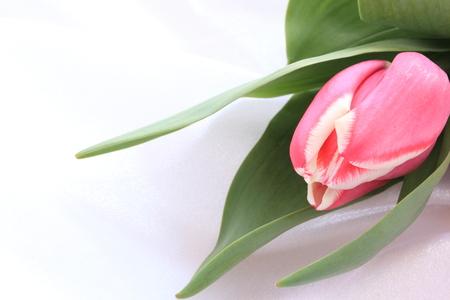 single flower: Single flower Turnip