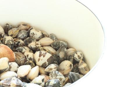 almeja: almeja japonesa congelada Foto de archivo