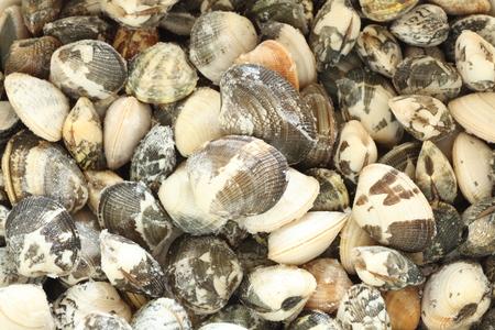 clam: frozen clam