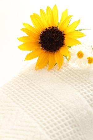 sun flower: sun flower on towel