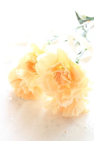 white color: Orange color carnation