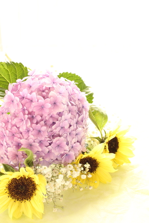 early summer: Hydrangea and sun flower for early summer image