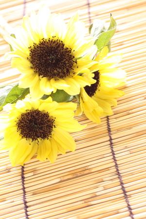 sun flower: sun flower for summer image Stock Photo