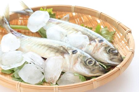 bluefish: Japanese Aji