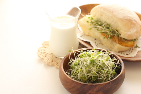 broccoli sprout sandwich and milk Stock Photo