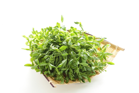 Chinese vegetable, bean sprout on white background