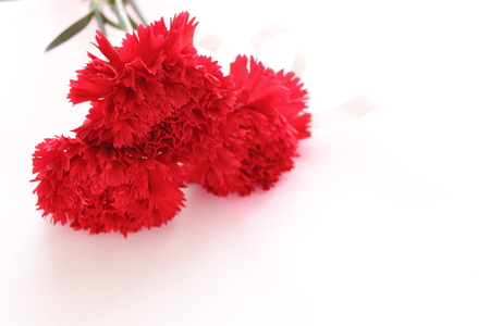 carnation bouquet isolated on white 版權商用圖片