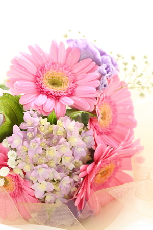 Pink daisy and purple hydrangea on white background