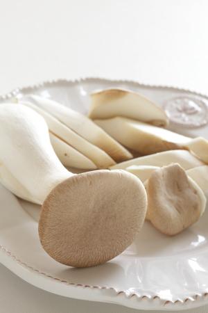 Japanese oyster mushroom 版權商用圖片