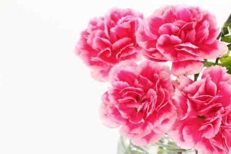 Elegant carnation on white background Zdjęcie Seryjne