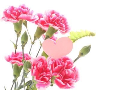 Pink and white carnation for Mothers Day image