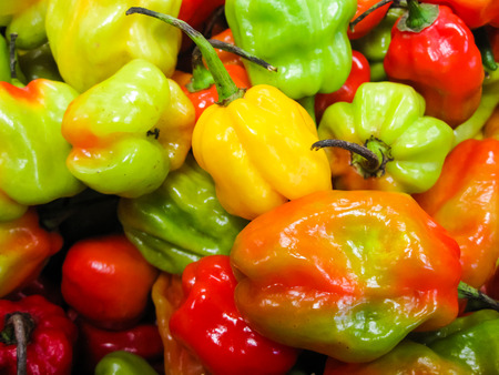 Colourful and Hot Scotch Bonnet Chilli Peppers