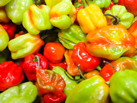 Colourful and Hot Scotch Bonnet Chilli Peppers photo