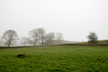 wharfedale: Beautiful and misty scenery in Bolton Abbey, Wharfedale, North Yorkshire, UK