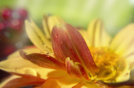 glimpse: This flower was eager for a glimpse of sun.