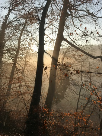 tristesse: Morning mood in the winter forest