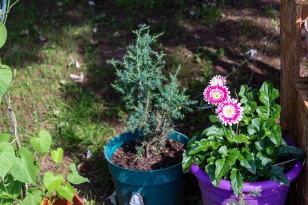 Flowers in our garden 07 - Spring Time 2019 Banco de Imagens