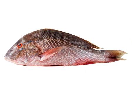 Raw clever red snapper for chance photographed on white background Stock Photo