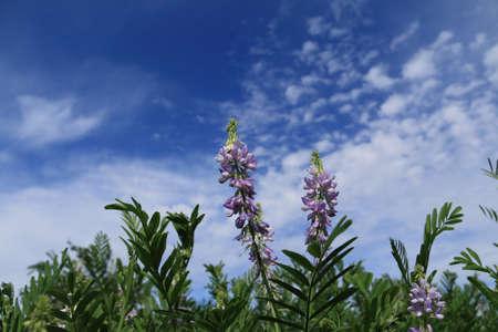 fondo azul: Flores silvestres sobre fondo de cielo azul.
