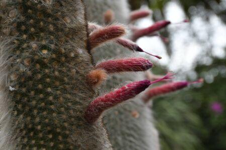 detail of cactus bloom Stock Photo