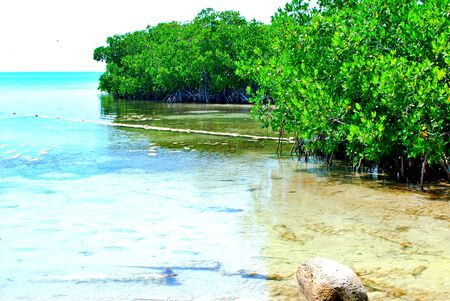 Isla Contoy is a declared area of Nature Reserve and National Wildlife Refuge