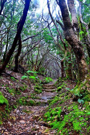 Ombres et lumières parmi la laurisylve de la forêt de la chaîne de montagnes d'Anaga