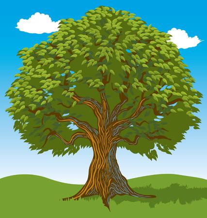 arboles frondosos: Árbol lleno de hojas Vectores