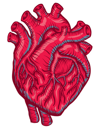 anatomical Red Heart Vector