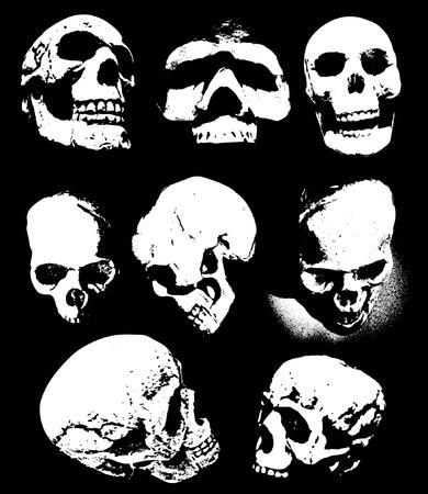 Various Scary human skulls