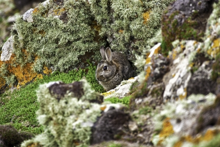 skomer island: Rabbit Hole