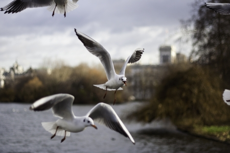 Closeup view of a flock of seagulls in flight midair with their wings outspread Stock Photo