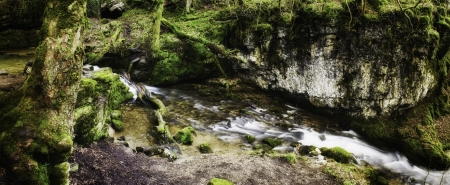 Panoramic background view of a scenic stream flowing through lush green woodland