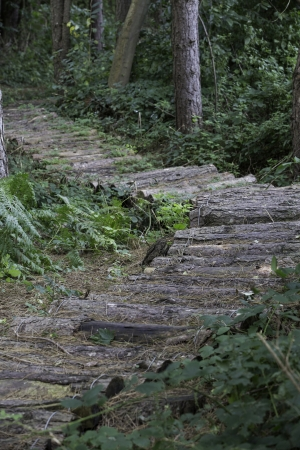 A rustic trail, created from cut logs, to form a natural path through the forest Stock Photo