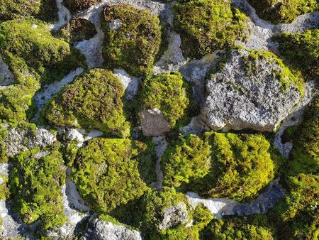 stone wall with moss in autumn with sun