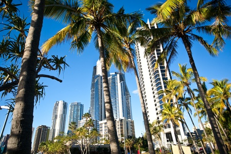 palm trees in front of a cityscape photo