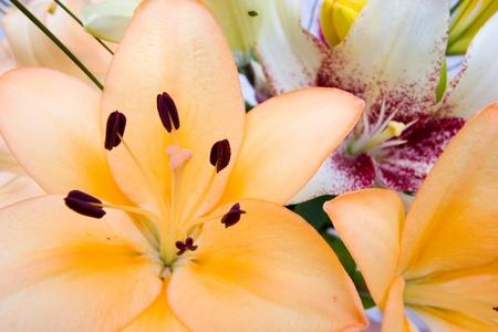 gazer: Colourful Arangement of Flowers Closeup Stock Photo