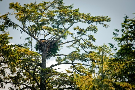 Birds nest sits in the branches of a tree photo
