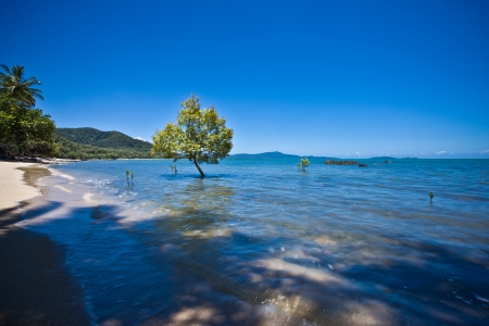 Peaceful seashore and tree under the clear blue sky