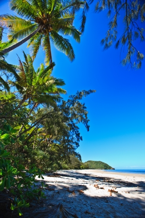 daintree: Beautiful deserted tropical beach with palm trees and golden sand under a sunny blue sky conceptual of vacations and travel